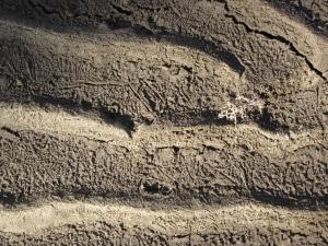 Mud Season waves