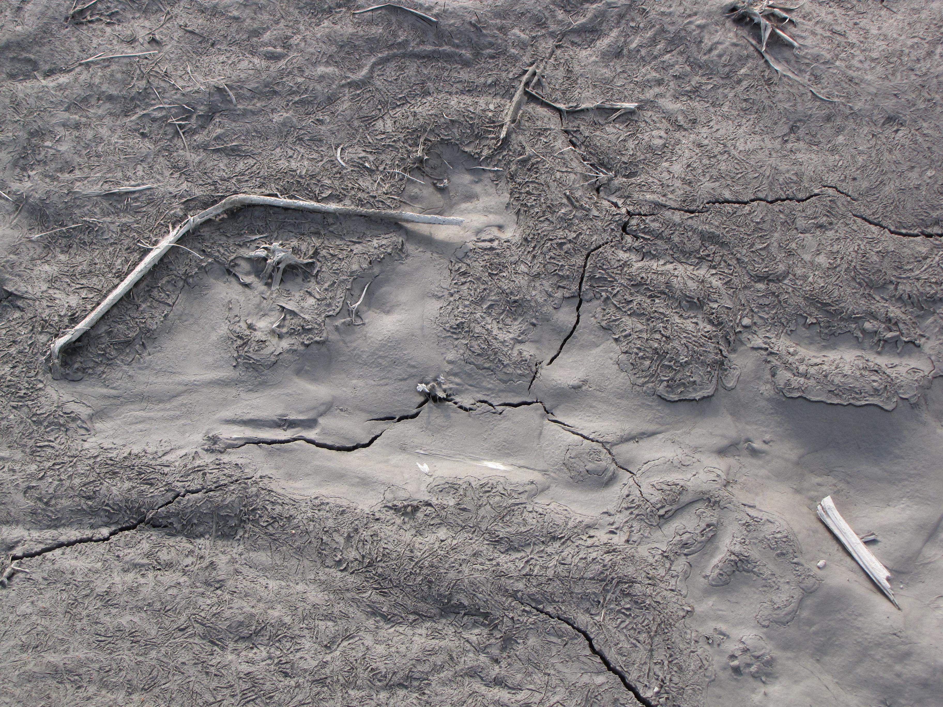 Mud Season filigree