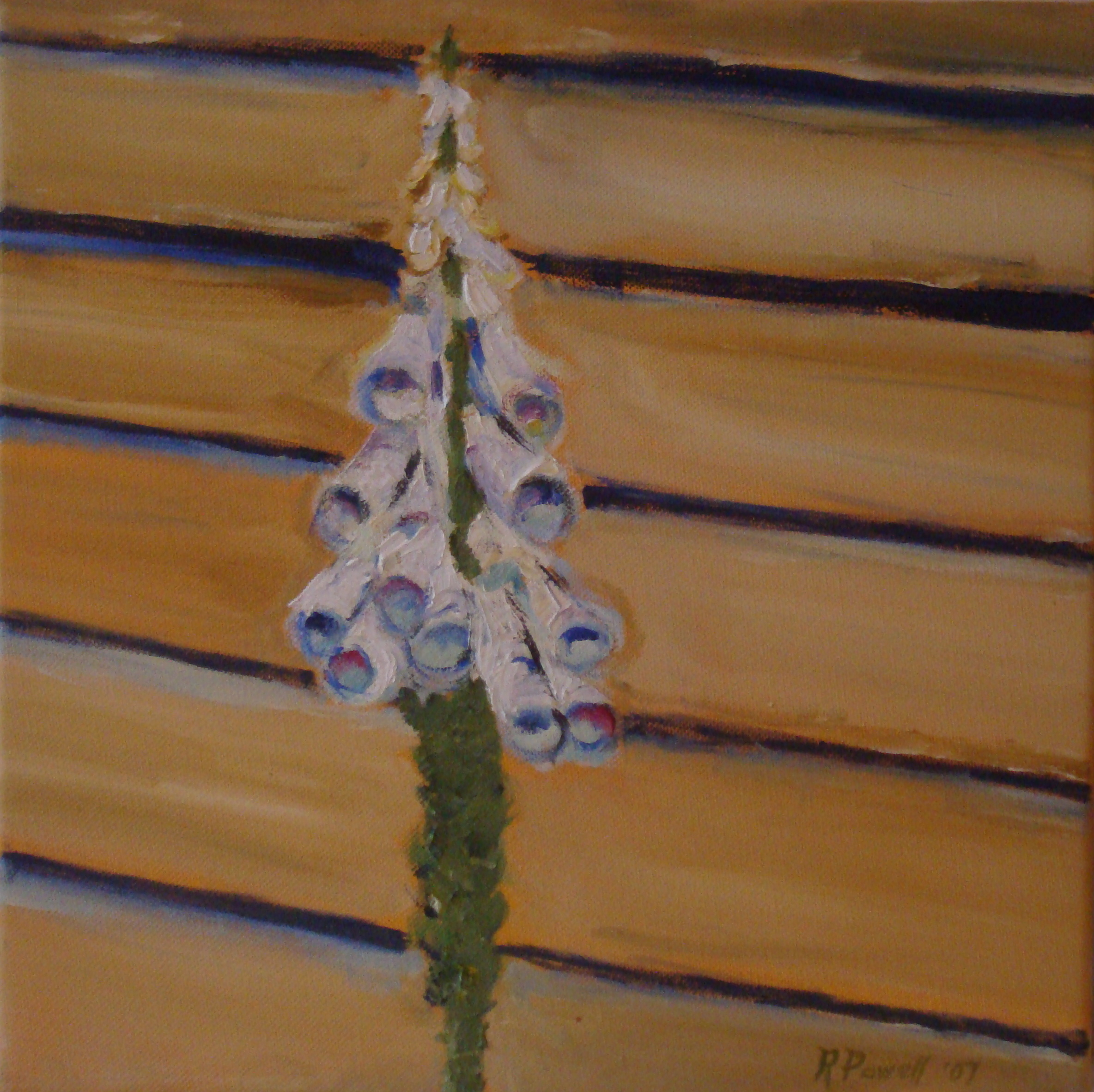 Foxglove (Digitalis), Russell Steven Powell oil on canvas, 12x12
