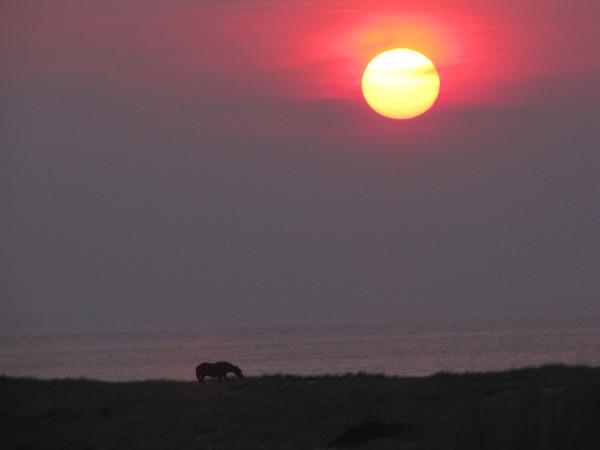 Sunset, Provincetown dunes