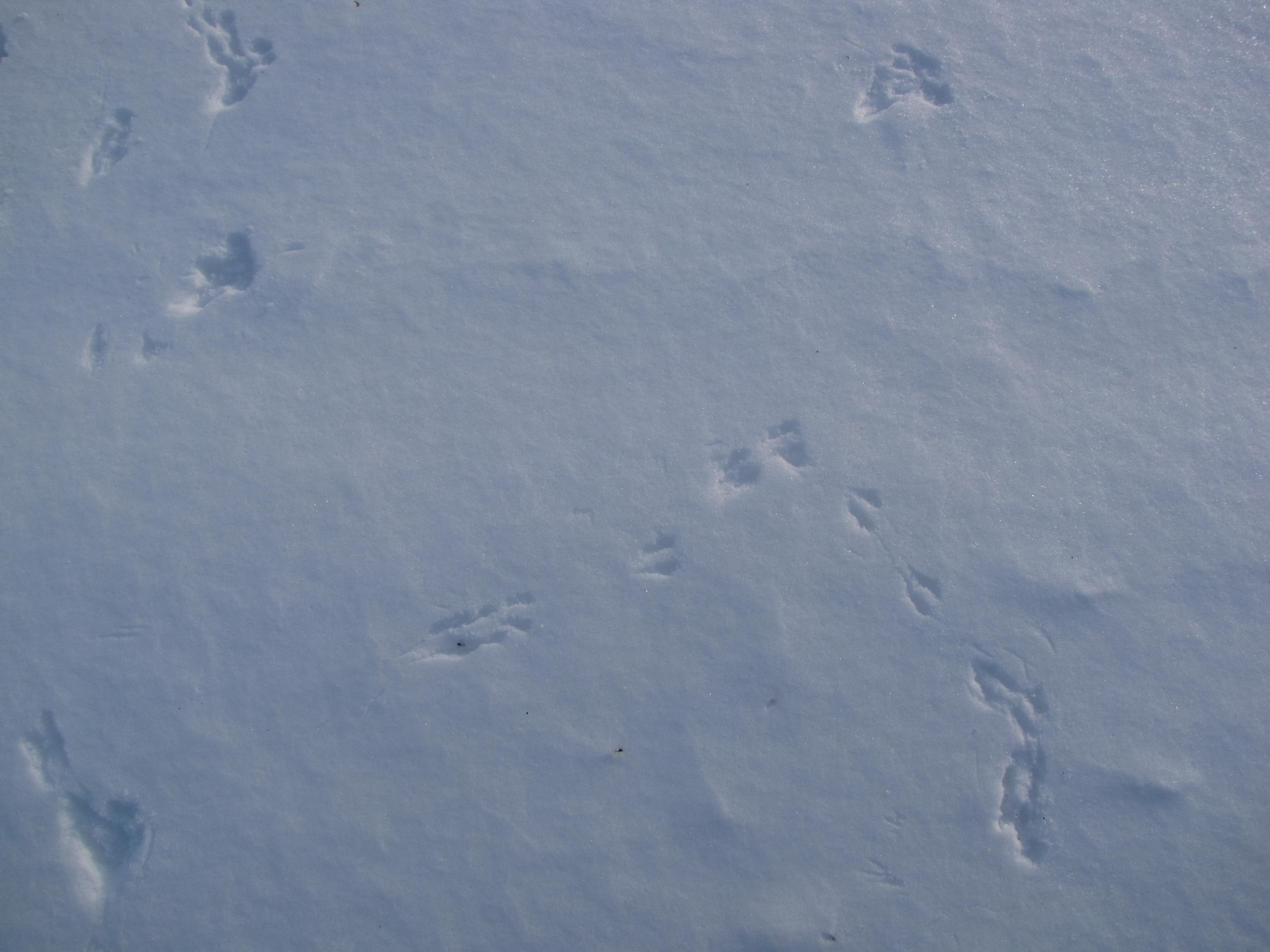 Snowprint I