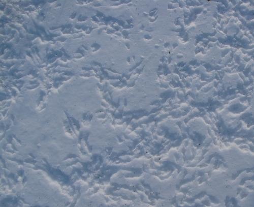 Snowprint III